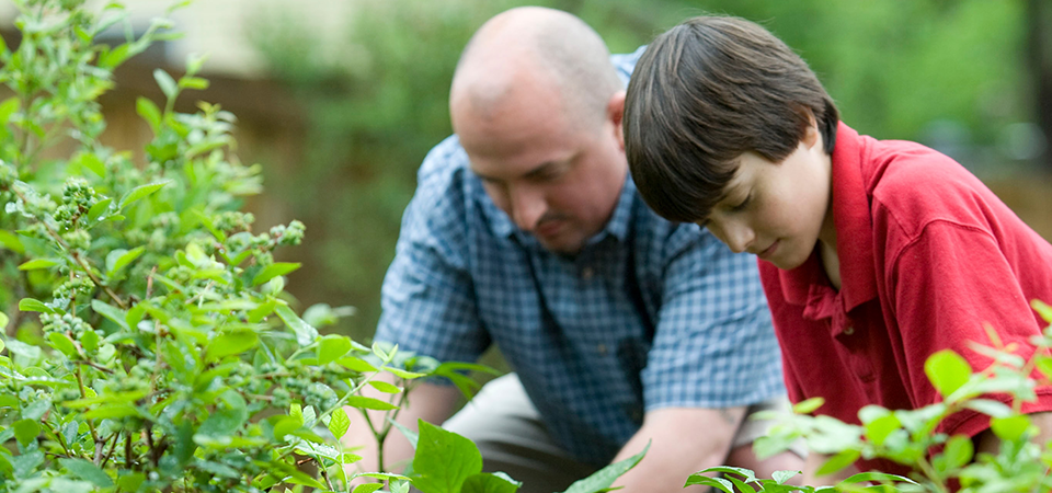 Image of an older gentleman and a young boy gardening together