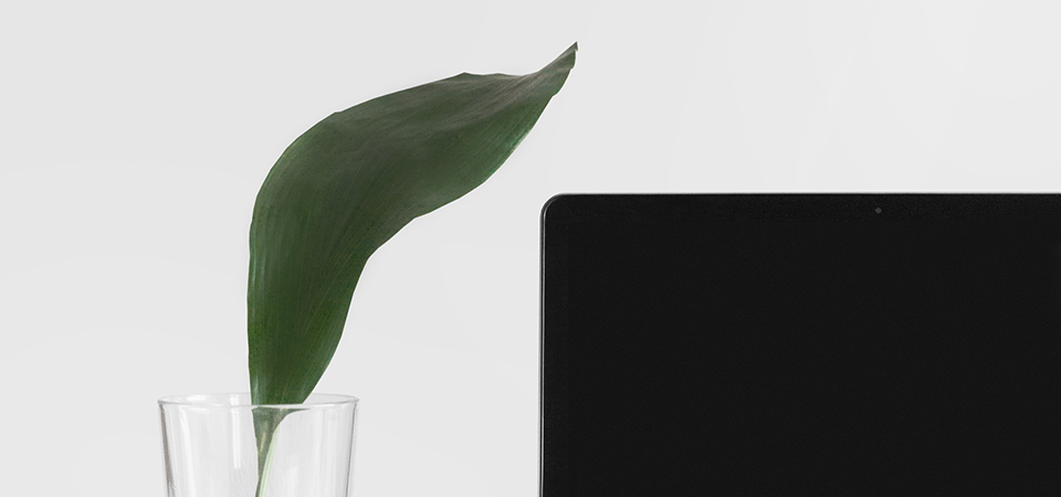 Image of a plant next to an iMac laptop