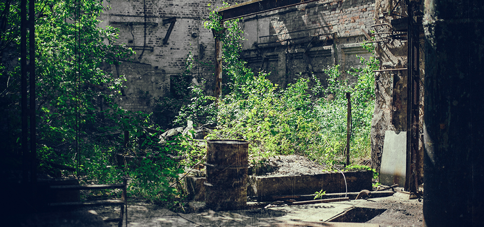 Image of an overgrown and abandoned room
